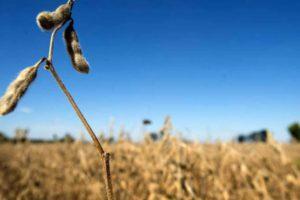 "Segundo a ABStartups, hoje há 72 empresas no País no setor de ""agritech"" (Ty Wright/Bloomberg)"
